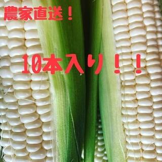 農家直送!激甘なホワイトコーン!!(野菜)