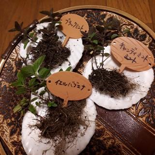 イエルバブエナ 第四種郵便50g以内(野菜)
