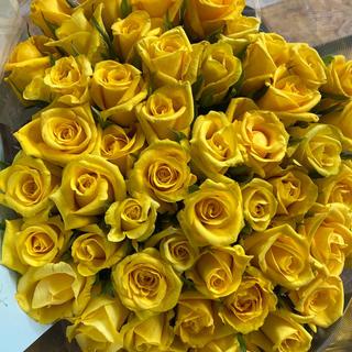 父の日分終了しました!バラ切り花 ゴールドラッシュ50本30センチ(その他)