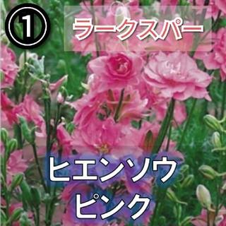 【ラークスパー①】ピンク八重 種子12粒(その他)