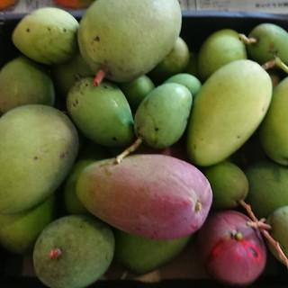 8. グリーン マンゴー3kg(フルーツ)