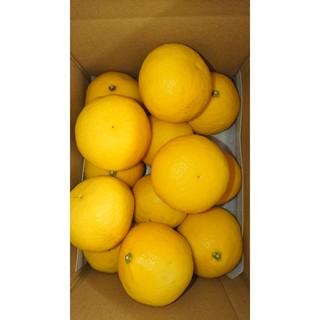 温室 小夏 Lサイズ 約2.1kg 高知県産 ご家庭用(フルーツ)