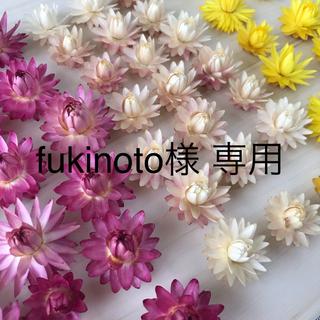 fukinoto様専用 貝細工(9)51個 ヘリクリサム ドライフラワー(ドライフラワー)