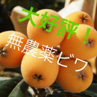 ちちぶファーム 枇杷 A級品(フルーツ)