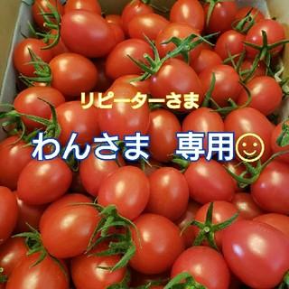 8㎏ わんさま専用です☺️ ミニトマト(野菜)