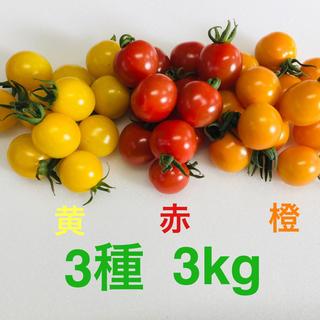 農家直送 ミニトマト3種 3kg(野菜)