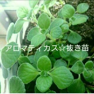 ホヌ様☆専用画面(プランター)