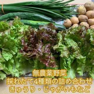 本日限定*採れたて無農薬野菜4種類の詰め合わせ*きゅうり等*ネコポスで翌日配達*(野菜)