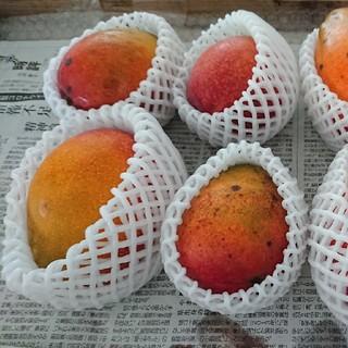 12. マンゴー 3kg 家庭用 傷黒点あり農家直送マンゴー製作所おまかせプラン(フルーツ)