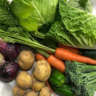 野菜セット キャベツ 80サイズ(野菜)