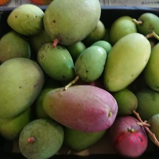 9. グリーン マンゴー 3kg(フルーツ)