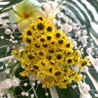専用❤スターフラワーブロッサム ひまわりカラー 60輪 ハーバリウム花材(ドライフラワー)