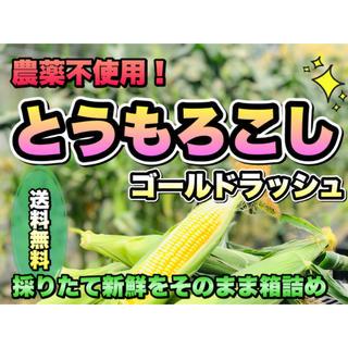採れたて新鮮! 甘さが自慢 ٩(ˊᗜˋ*)و  トウモロコシ ゴールドラッシュ(野菜)