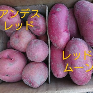 新赤じゃがいも3㎏セット(野菜)