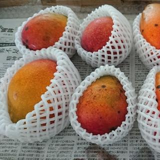 15. マンゴー 3kg 家庭用 傷黒点ありマンゴー製作所おまかせプラン(フルーツ)