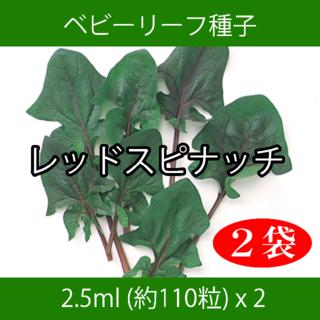 ベビーリーフ種子 B-41 レッドスピナッチ 2.5ml 約110粒 x 2袋(野菜)