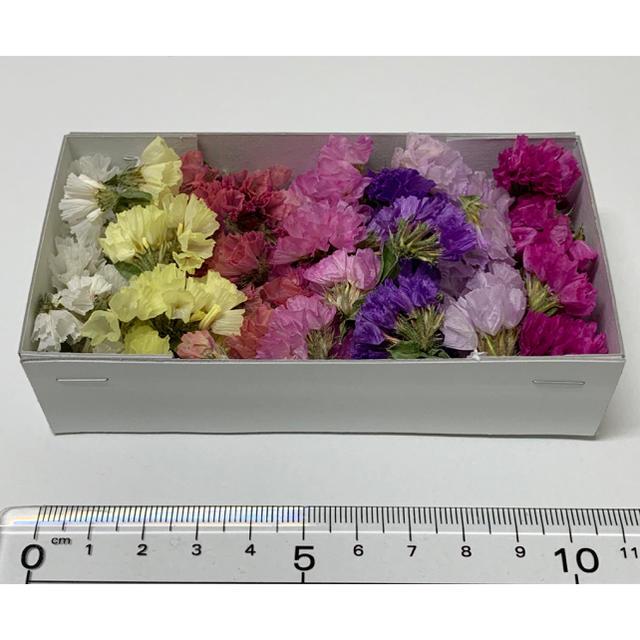 全10色 スターチス花のみ ハンドメイドのフラワー/ガーデン(ドライフラワー)の商品写真
