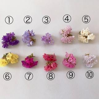 全10色 スターチス花のみ(ドライフラワー)