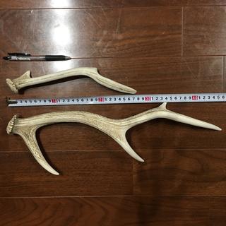 鹿の角(インテリア雑貨)