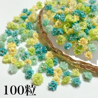 かすみ草 ドライフラワー イエローグリーン100粒(ドライフラワー)