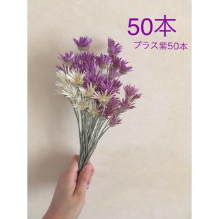 キセランセマム 50本(ドライフラワー)