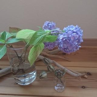 お値下げ ニゲラ 白花 種 ドライフラワー 4本(ドライフラワー)