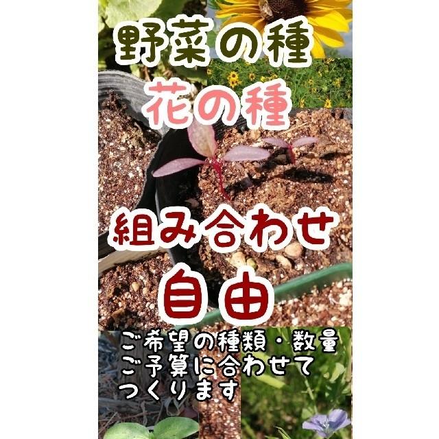 【家庭菜園に水色のお花を】亜麻仁の種子 &おまけの種 食品/飲料/酒の食品(野菜)の商品写真