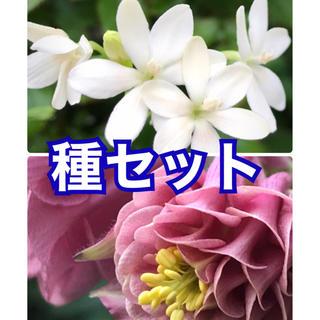 花の種 2品種セット(その他)