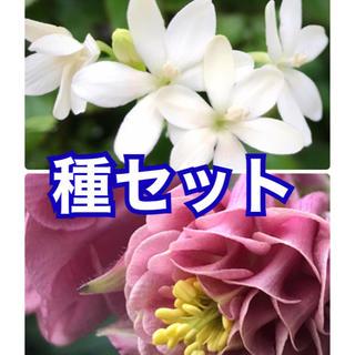 花種 2品種セット(その他)