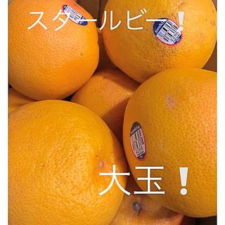グレープフルーツ スタールビー 大玉 8〜9個(フルーツ)
