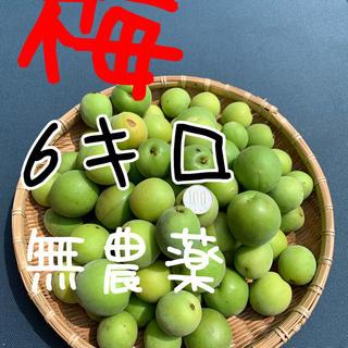 6キロ無農薬B品ワケあり群馬県産 生梅 送料込!梅酒 梅ジュース 梅シロップ(フルーツ)