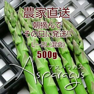 【クール便対応】太 アスパラ 500g 新鮮野菜(野菜)