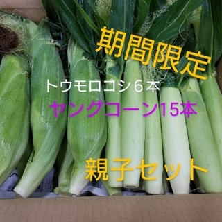 🌽今だけ限定🌽トウモロコシの親子セット🌽(野菜)