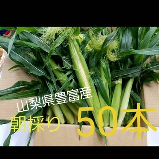 🌽トウモロコシの子供ヤングコーン🌽朝採り発送(野菜)