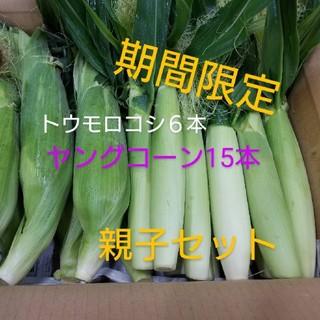 🌽トウモロコシの親子セット🌽朝採り発送(野菜)