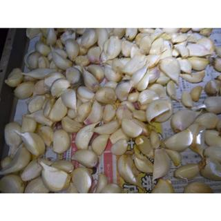 生産農家直送!新鮮な生ニンニク50粒 使い易いバラ売りです!国産ニンニク(野菜)