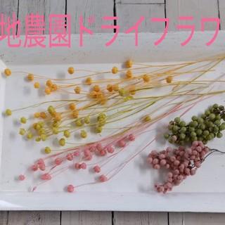 大地農園☆リンフラワー&ペッパーベリー☆花材セット(ドライフラワー)