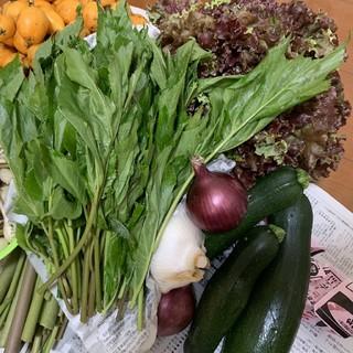 無農薬 野菜セット 野菜(野菜)