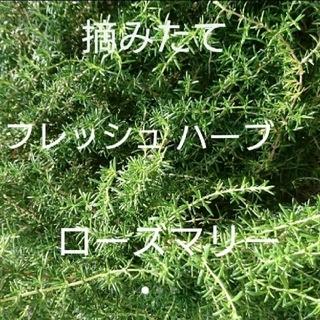 フレッシュハーブ ローズマリー(その他)