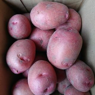 アンデスレッド 3㎏(野菜)
