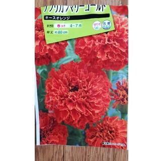 アフリカンマリーゴールド キースオレンジ 種 50粒(その他)
