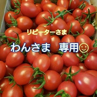 6kg わんさま専用です☺ ミニトマト(野菜)