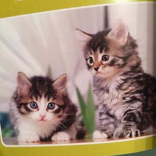 ショウガクカン(小学館)の本 子猫の育て方 百科 仔猫の育て方 (その他)