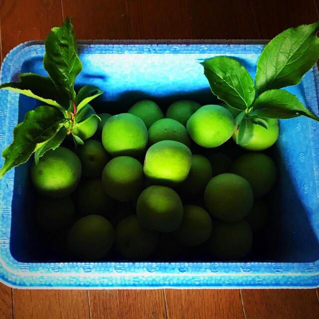 とれたて梅(南高梅、、、少し点々あり) 食品/飲料/酒の食品(フルーツ)の商品写真