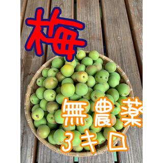 3キロ無農薬ワケありB品 群馬県産 生梅 送料込!梅酒 梅ジュース 梅シロップ(フルーツ)