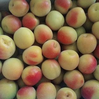 無農薬! 青梅 赤紫蘇 セット 3キロ(フルーツ)