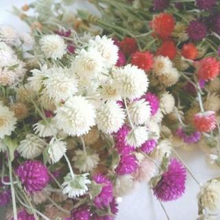 千日紅(センニチコウ)ドライフラワー30個 自家製 ハンドメイド 素材 花材(ドライフラワー)