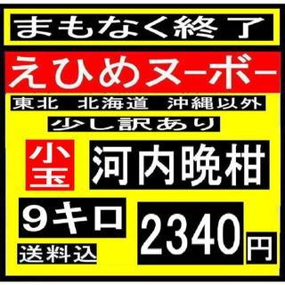★ 小か6 えひめヌーボーの  少し訳あり 小玉河内晩柑 9キロ (フルーツ)
