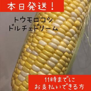 本日発送 トウモロコシ ドルチェドリーム(野菜)