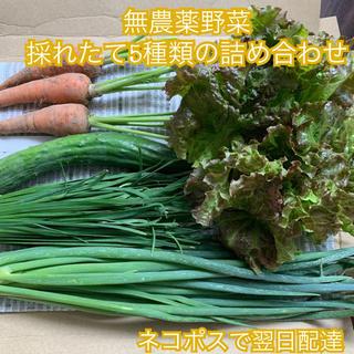 無農薬野菜*採れたて5種類の詰め合わせ*にら・きゅうりなど*ネコポスで翌日配達*(野菜)
